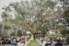 wedding ceremony under large oak tree on ribault club property