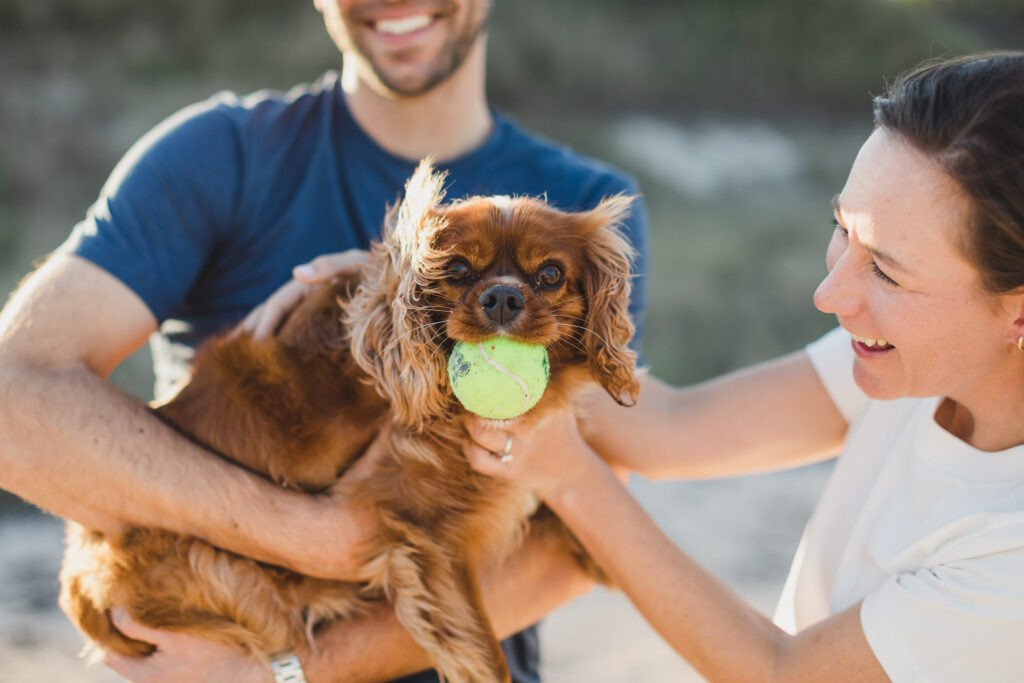 dog holding ball in mouth with couple petting him